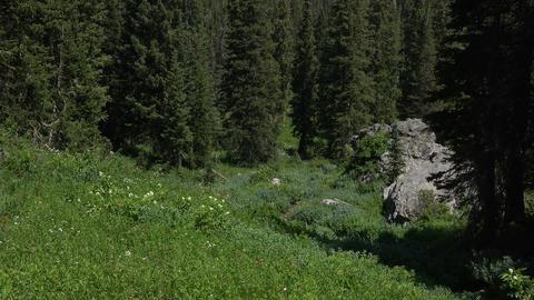 Green mountain meadow in forest wildflowers 4K 053 Footage