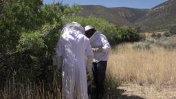 Honey bee hives beekeepers harvest rural farm 4K Footage