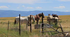 Horses around water sad conditions in dry valley pasture DCI 4K Footage