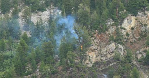 Lightning strike starts forest fire tree burns DCI 4K Footage