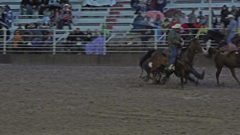 Night rodeo steer wrestling 4K 280 Footage