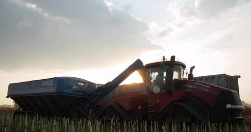 Tractor with a trailer is pouring the harvested wheat into the truck trailer, 4k Live Action