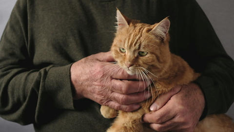 Old man stroking the chest of a ginger tabby cat Live Action