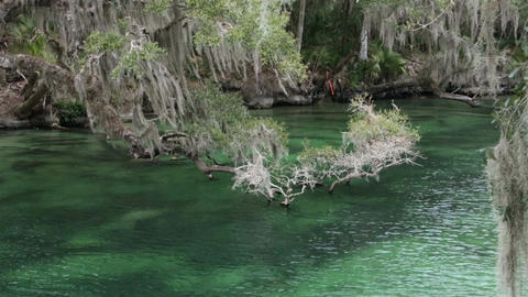 River Blue Spring State Park Florida HD 1935 Footage