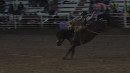 Saddle Bronc horse cowboy rodeo ride 4K 287 Footage