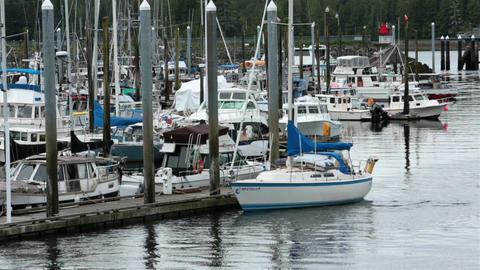 Sailboats fishing vacation boats Ketchikan Alaska marina HD 7626 Footage