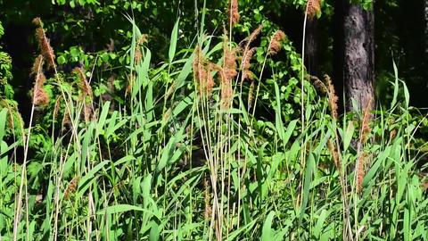 Plants growing near water Footage