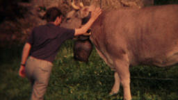 Swiss cow with large neck bell vintage 8mm transfer HD 9769 Footage