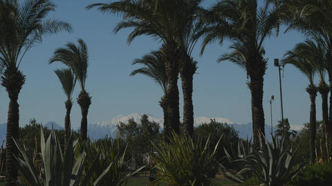 Park with palms and agaves Live Action