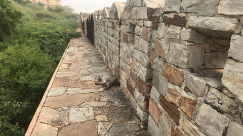 Jaipur, India - defensive structures on a high mountain part 13 Live Action