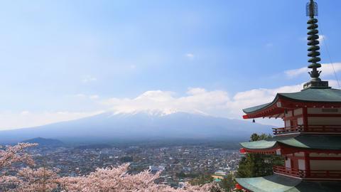 Chureito pagoda with sakura cherry blossom and Fuji mountain japan in spring season Live Action