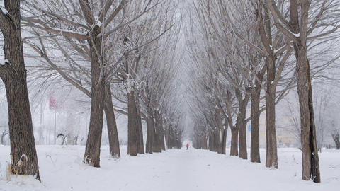 Beautiful snow-covered trees on winter alley Live Action