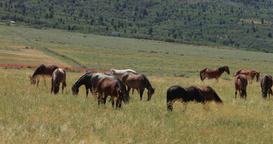 Wild Mustang horses in captivity mountain valley DCI 4K Footage