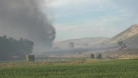 Wildlife across wheat field farm building destroyed 4K Footage