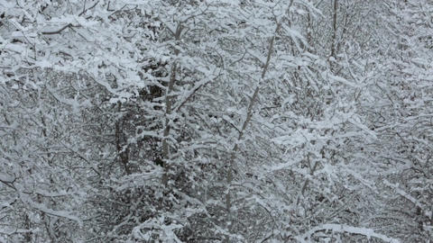 Winter snow blizzard mountain forest trees fast timelapse Footage
