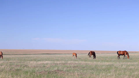 pasture in the steppe Footage