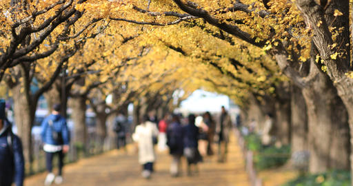 Walking people at the ginkgo street in Tokyo at autumn ライブ動画