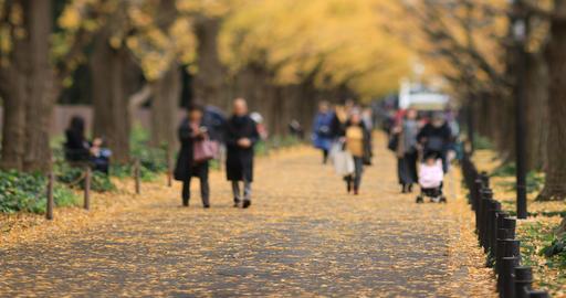 Walking people at the ginkgo street in Tokyo at autumn handheld ライブ動画