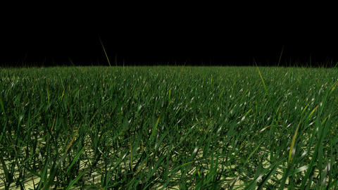 Grass Field with Alpha Channel Animation