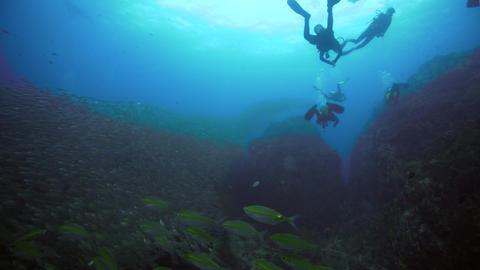 SCUBA divers next to big school of fish Live Action
