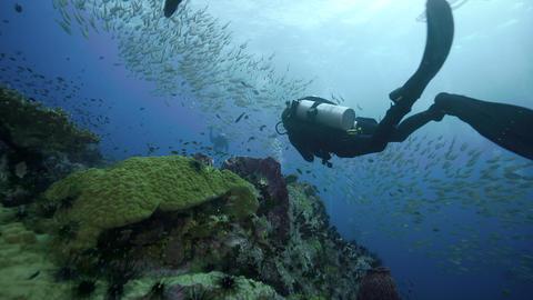 4k high quality SCUBA diving towards big school of fish Live Action