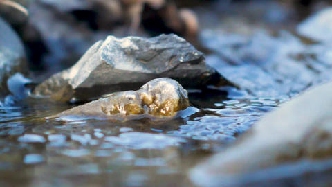 Close up of stones in the river, pure water stream Live Action