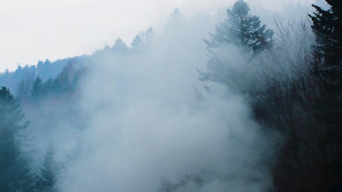 Mystic foggy forest in the Beskid mountains Live Action