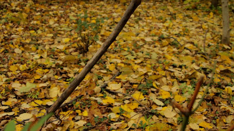 Autumn in Park, Carpet Of Yellowed Leaves, Wind Blowing, Cold Footage