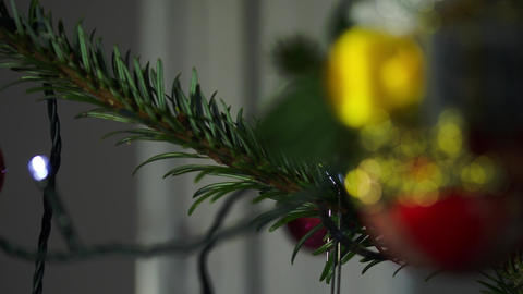 Mary Christmas Globe On A Christmas Tree Branch, Rack Focus Footage