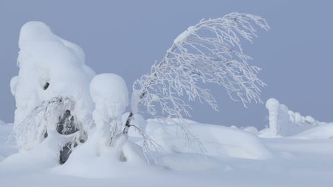 Snowdrifts and Thin Tree. Seamless Loop Footage