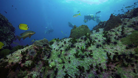 4k SCUBA divers over coral reef Live Action