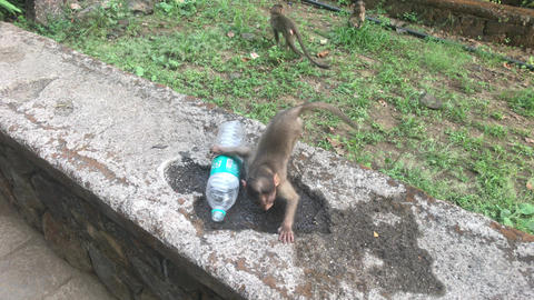 Mumbai, India - The life of monkeys in a natural environment part 2 Live Action