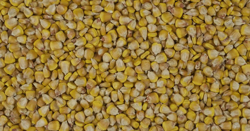Rotation, background from corn grains. Grocery background. Top view. Copy space Live Action