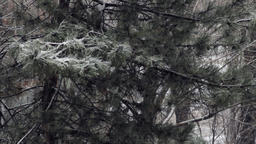 Winter Landscape, Snow Falling Over Trees, Deserted Park, Winter in The City Footage