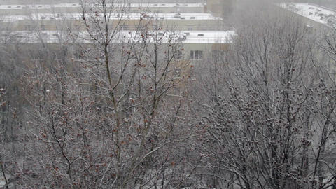 Winter In The City, First Snow, White Building Rooftops, December Snow, Pan Footage