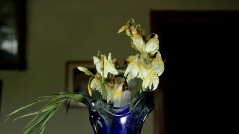 Dried Out Flowers In An Old And Dusty Vase, Nostalgia, Forgetfulness, Old House Footage