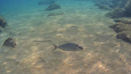 A fish make a a whole circle around camera and then escape 2.7k Footage