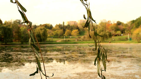 Beautiful Autumn Day In The Park, Dried Willow Leaves, Rack Focus Footage