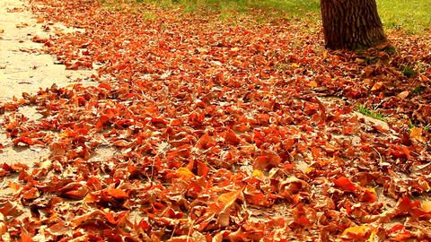 Beautiful Autumn Afternoon In Park, Fall In The City, Carpet Of Dry Leaves, Tilt Footage