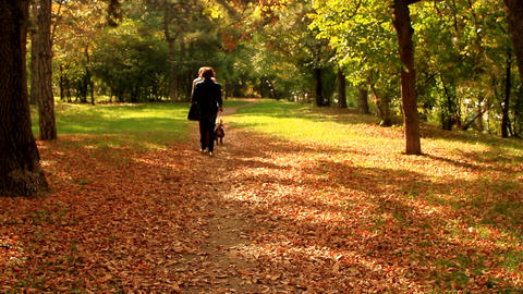 Couple Walking The Dog In The Park On A Beautiful Autumn Afternoon, Dried Leaves Footage