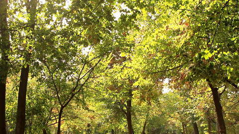 Autumn In The Park, Beautiful Trees With Yellowed Leaves, Sunny Afternoon, Pan Footage