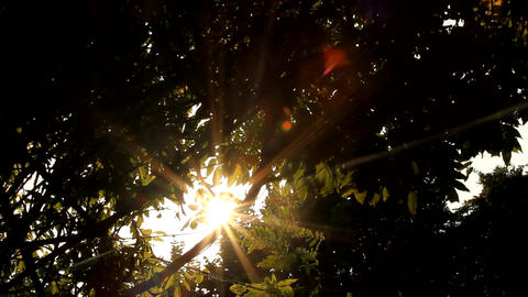 Beautiful Autumn Sun Between Tree Branches, Afternoon, Fall, Sun Flare Footage