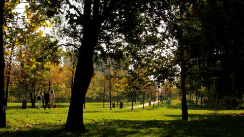 Beautiful Autumn Afternoon In A Park, Fall in The City, People Passing By, Pan Footage
