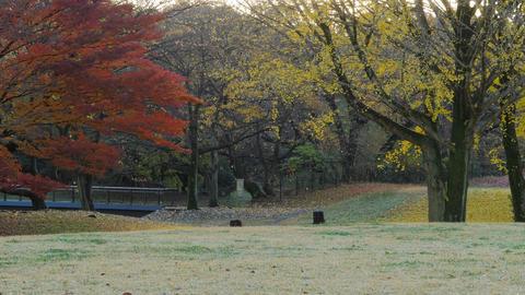 [4K] Autumn Leaves / Fall Colors - Nogawa Park (Tokyo, Japan) - Field Recording  ライブ動画