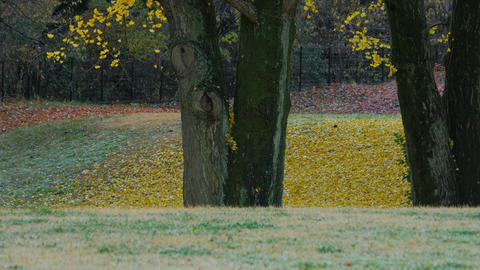 [4K] Autumn Leaves / Fall Colors - Nogawa Park (Tokyo, Japan) - Field Recording  ビデオ