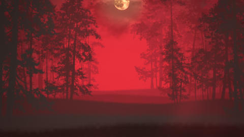 Mystical halloween background with dark forest and fog Animation