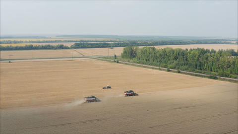 Harvesting of wheat in summer. Two red harvesters working in the field. two Live Action