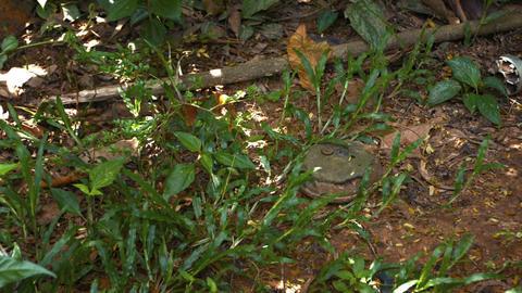 Dangerous. Forgotten Landmine in the Forest. Video Footage