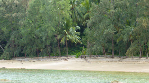 Treeline along a Tropical Beach Paradise. Video Footage