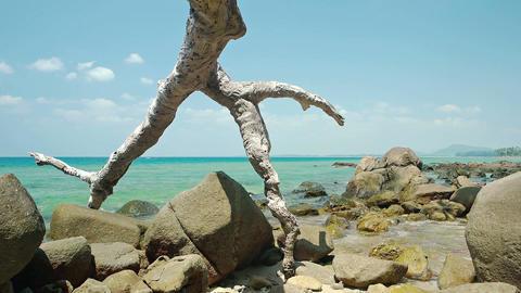Driftwood Log on a Rocky Tropical Beach. FullHD video Footage